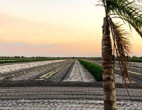 Reducing Chemical Herbicides on the Farm